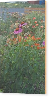 Pinkviolet Dasies With Garden Flowers Wood Print by Thelma Harcum