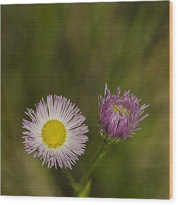 Pinky And Me Wood Print by LeeAnn McLaneGoetz McLaneGoetzStudioLLCcom