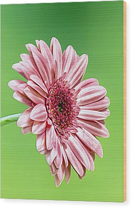 Pinky On Lime Wood Print by Bill Tiepelman