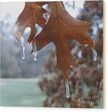 Pinoak And Ice Wood Print by Louise Peardon