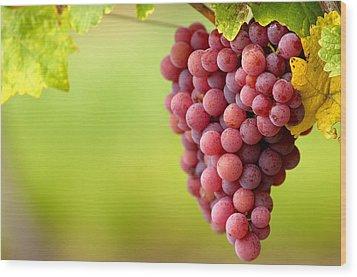 Pinot Noir Grapes Wood Print by Jeremy Walker