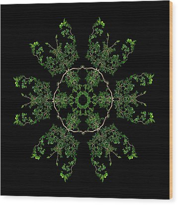 Pinwheel II Wood Print by Debra and Dave Vanderlaan