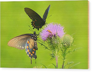 Wood Print featuring the photograph Pipevine Swallowtails In Tandem by Laurel Talabere