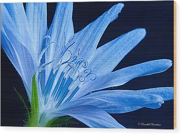 Wood Print featuring the photograph Pistil's Of Chicory by Randall Branham