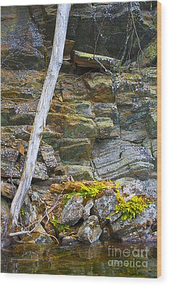 Plant Life On Rocky Canadian Lake Shore Wood Print by Gordon Wood