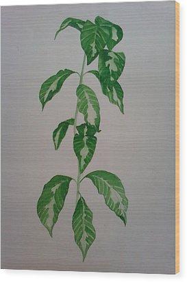 Plant Wood Print by Shilpa V N