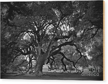 Plantation Oak Tree Wood Print by Perry Webster