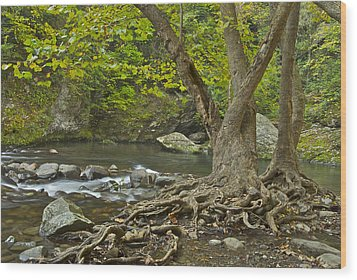 Planted By The Rivers Of Water Wood Print by Michael Peychich