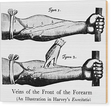 Plate From William Harveys Exercitatio Wood Print by Science Source