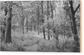Platinum Forest Wood Print by Sarah Couzens