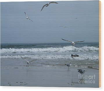 Playful Gulls Wood Print by Laurence Oliver