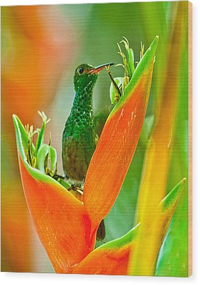 Wood Print featuring the photograph Plenty Of Nectar by Susi Stroud