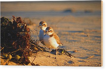 Plover Boys Wood Print by Catherine Natalia  Roche