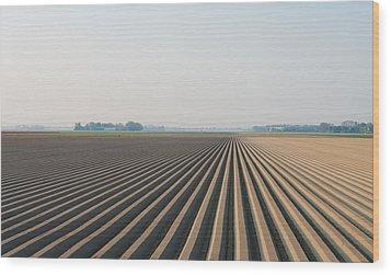 Plowed Field Wood Print
