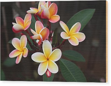 Wood Print featuring the photograph Plumaria Of Red And Yellow by Craig Wood