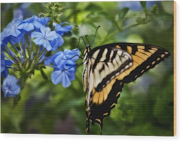 Wood Print featuring the photograph Plumbago And Swallowtail by Steven Sparks