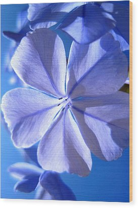 Plumbago Flowers Wood Print by Catherine Natalia  Roche
