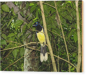 Wood Print featuring the photograph Plush-crested Jay by David Gleeson