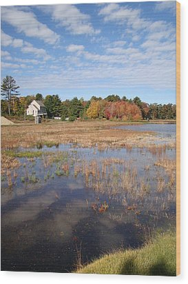 Plymouth Cranberry Bog Wood Print by Mark Haley
