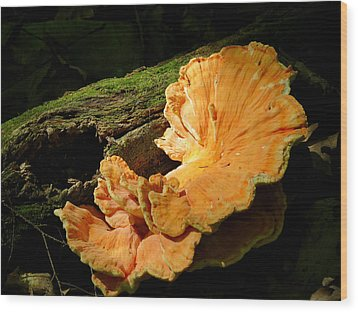 Pockets And Shelves Wood Print