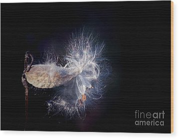 Wood Print featuring the photograph Pod In The Wind by Deniece Platt