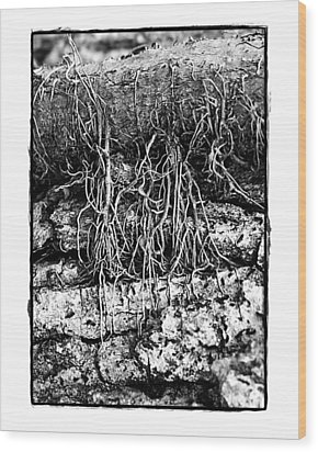 Poison Ivy Roots Wood Print by Judi Bagwell