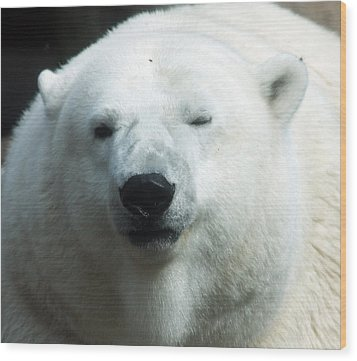 Wood Print featuring the photograph Polar Bear - 0001 by S and S Photo