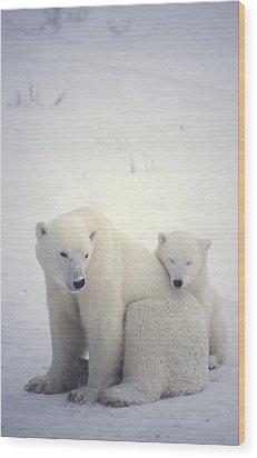 Polar Bear And Cub Wood Print by Chris Martin-bahr