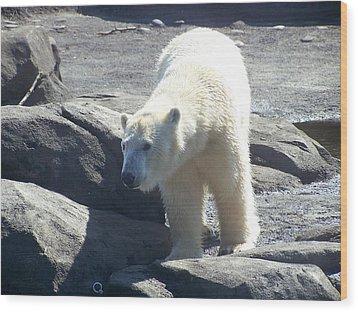 Polar Bear Looks Wood Print by Geri Chamberlin
