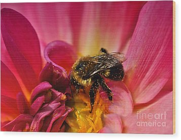 Pollen Covered  Wood Print by Elaine Manley