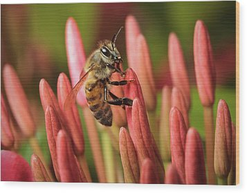 Pollination  Wood Print by Nick  Shirghio