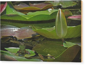 Wood Print featuring the photograph Pond Frog Kingdom by Deborah Smith