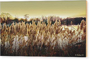 Pond Grasses Wood Print by Brian Wallace