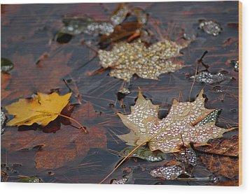 Pond Leaf Dew Drops Wood Print by LeeAnn McLaneGoetz McLaneGoetzStudioLLCcom