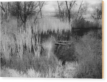Pond Wood Print by Mark Greenberg