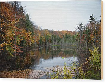 Pond On Limekiln Road In Inlet New York Wood Print by David Patterson