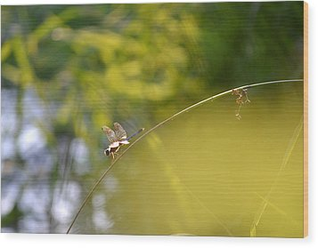 Wood Print featuring the photograph Pond-side Perch by JD Grimes
