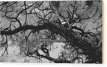 Wood Print featuring the photograph Ponderosa Pine by Rosemarie Hakim