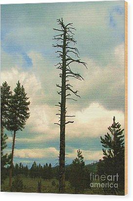 Ponderosa Pine Snag Wood Print by Michele Penner