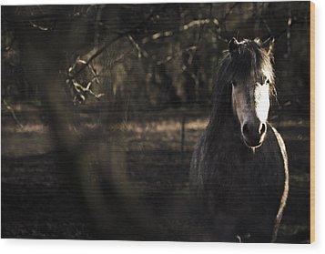 Pony In The Brambles Wood Print