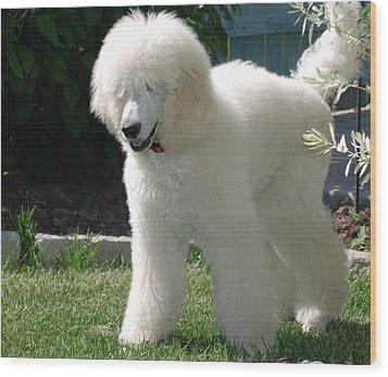 Poodle Bear Wood Print