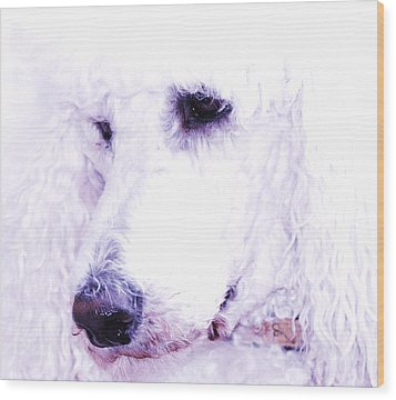 Poodle Face Wood Print by Lisa  DiFruscio