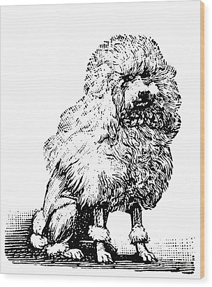 Poodle Wood Print by Granger