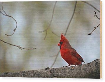 Pop Of Color Wood Print by Lori Tambakis