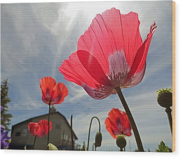 Poppies And Sky Wood Print by Robert Meyers-Lussier
