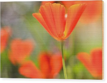 Poppies In The Wind Wood Print by Heidi Smith