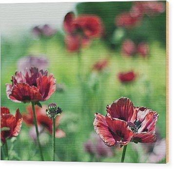 Poppies Wood Print by Olga Tremblay
