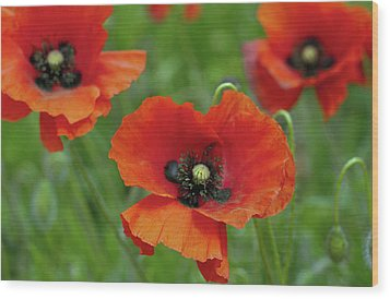 Poppies Wood Print by Photo by Judepics
