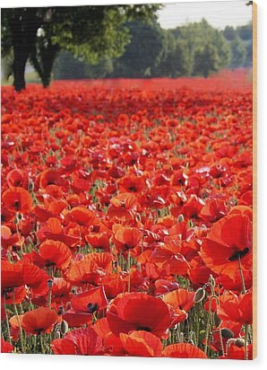 Poppies  Wood Print by Tammy Cantrell