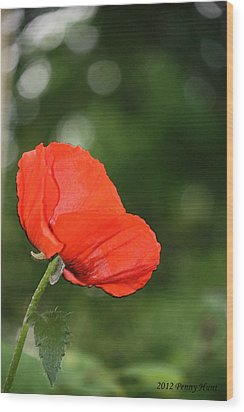 Wood Print featuring the photograph Poppy Dreams by Penny Hunt